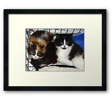 Sweet Foster Babies Framed Print