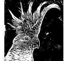 Cockatoo - lino cut print Photographic Print