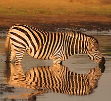 Sweet waters by Explorations Africa Dan MacKenzie