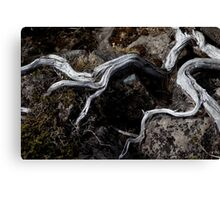 Exposed limbs Canvas Print