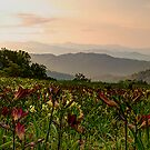 A Blue Ridge Summer by James Hoffman