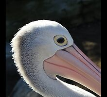 You Are A Pelican - Up Close and Personal by deanworld