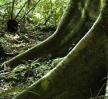 Deep Green tropical roots by Simon and Rose Clark