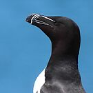 Razorbill Profile by naturalnomad