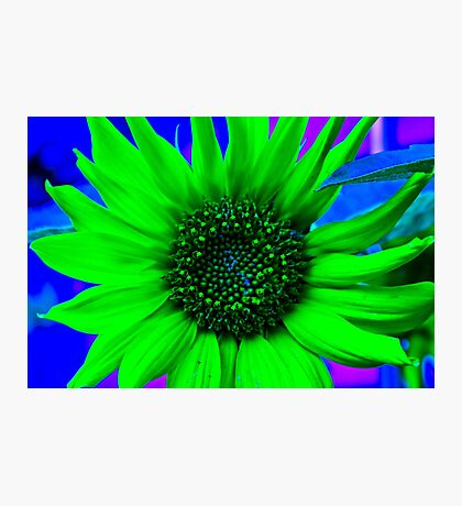 Psychedelic Sunflower Photographic Print
