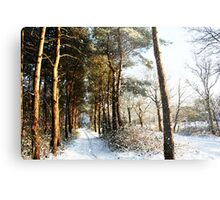 Forest Snow Scene Metal Print