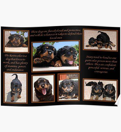 Rottweiler Memories Poster