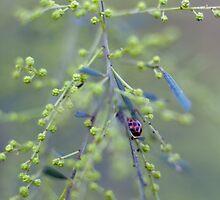 Ladybird by Mel Brackstone