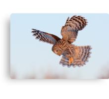 Ural Owl in flight Canvas Print