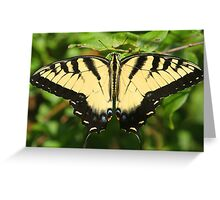 A tiger swallowtail butterfly Greeting Card