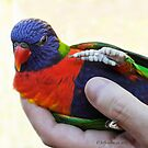 A Bird In the Hand... by Heather Friedman