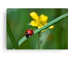 Ladybird on grass Canvas Print