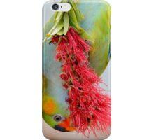 Purple-crowned Lorikeet by Keeper Holly iPhone Case/Skin