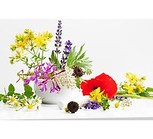 Gartenkräuter Photographic Print