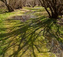 Sunlight on a Suffolk coppice wood by Christopher Cullen