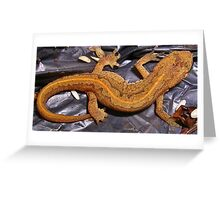 Garden Newt Macro Greeting Card