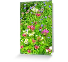 Wildflower Explosion Greeting Card