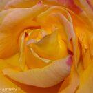 Pretty Petals by DavesPhoto