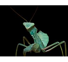 Giant African Praying Mantis Photographic Print