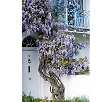Wisteria balcony Photographic Print