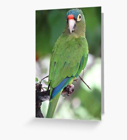 Periquito II Greeting Card