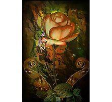 Rose An Inspiration Photographic Print