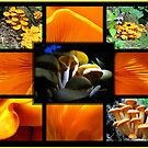  Jack-O-Lantern (Omphalotus olearius) Fungi by Jean Gregory  Evans