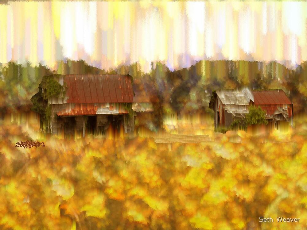 Looking Through Weeds by Seth  Weaver