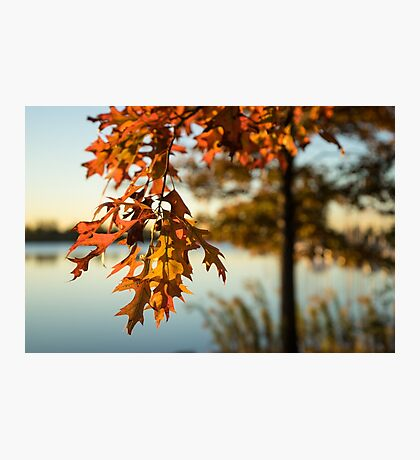 Sunny Autumn Colors on the Shore - the Changing Oak Tree Photographic Print