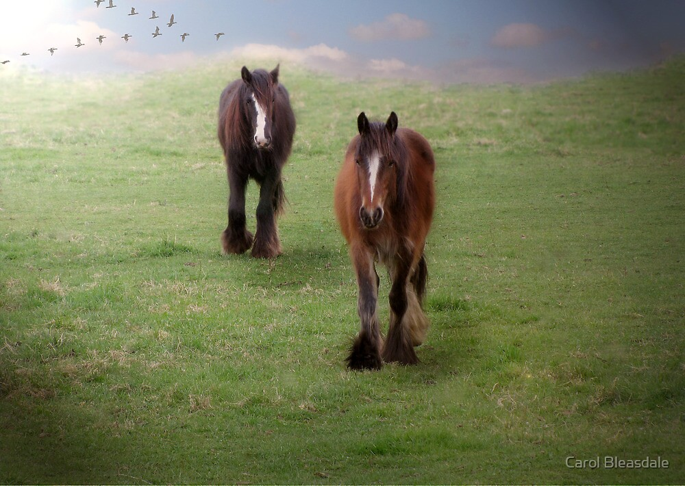 Heading Home by Carol Bleasdale