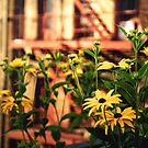 High Line Flowers - New York City by Vivienne Gucwa