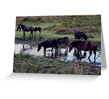 Dartmoor Pony Herd At Watering Hole Near Haytor Late August 2011 Greeting Card