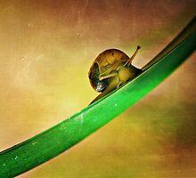 Slide by saseoche