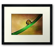 Slide Framed Print