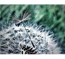 Dandelion II Photographic Print