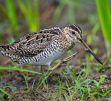 Successful Snipe Hunt by Daniel  Parent