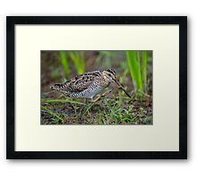 Successful Snipe Hunt Framed Print