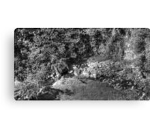 Vulture on the river. 3530HDR Canvas Print