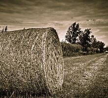 Harvest 2 by Richard Fortier