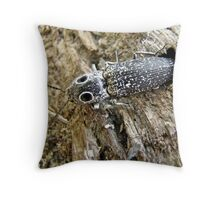 Eastern Eyed Elder Click Beetle - Alaus oculatus Throw Pillow