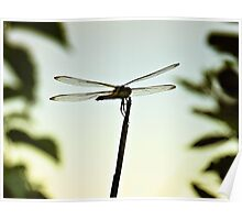Dragonfly Resting Place Poster