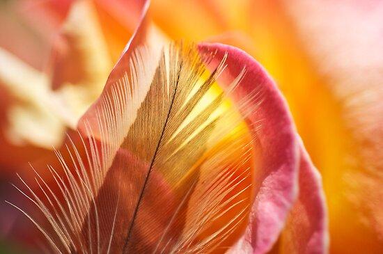 Rose Burst by Kenneth Haley