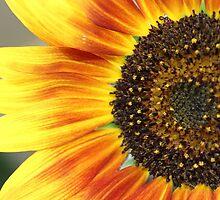 My Sunshine by aprilann
