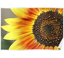 My Sunshine Poster