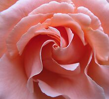 Swirls in Pink by Pat Yager