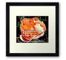 Fluffy rose banner Framed Print