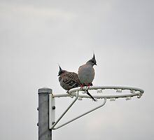 Pigeon Pair by petejsmith