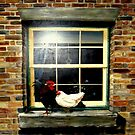 A rooster & hen on a window Ledge by cjcphotography