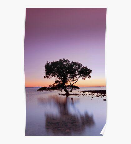 Winter Morning Sunrise - Cleveland Qld Australia Poster