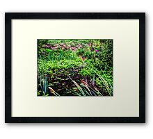 Lily pond Devon Framed Print